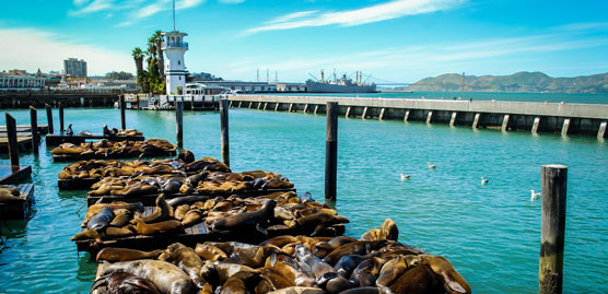 image of fisherman's wharf in san francisco with seals sunning themselves